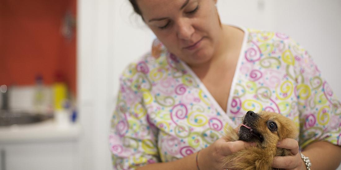 Peluquería canina y felina - Agroconil