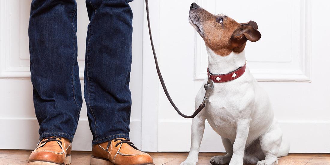 Entrenar a tu cachorro para que haga las necesidades fuera